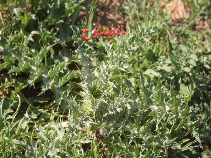 Les Plantes D'Azails