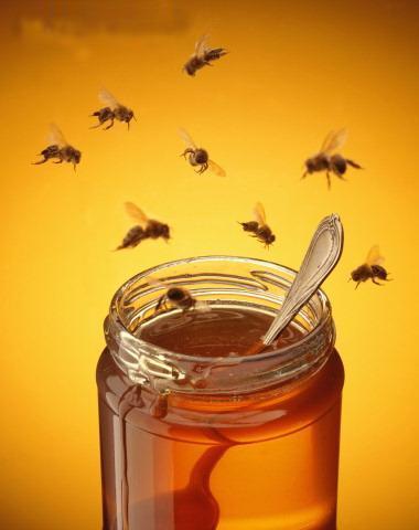 Miel pot abeilles copie 1